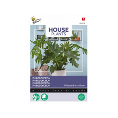 Philodendron Selluom
